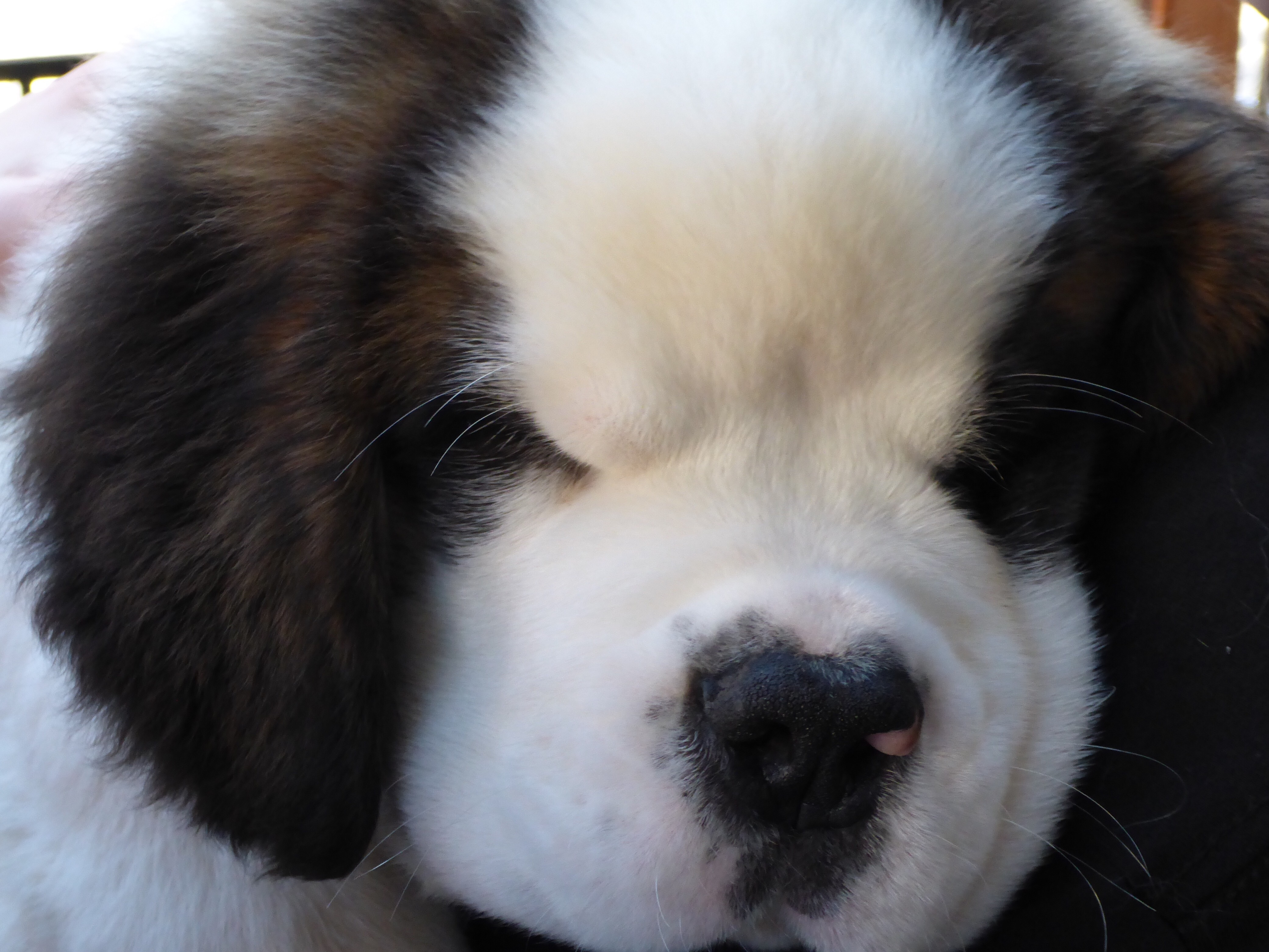 Saint Bernard Earthrobert Passersby who see the marketer's call to action and then tweet a photo of their smartphone to @mophie—using the hashtag, #mophierescue—could. earthrobert